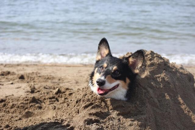 砂風呂を満喫する犬