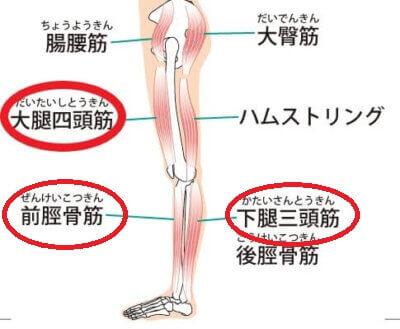 ウォーキングで筋肉痛になる部位